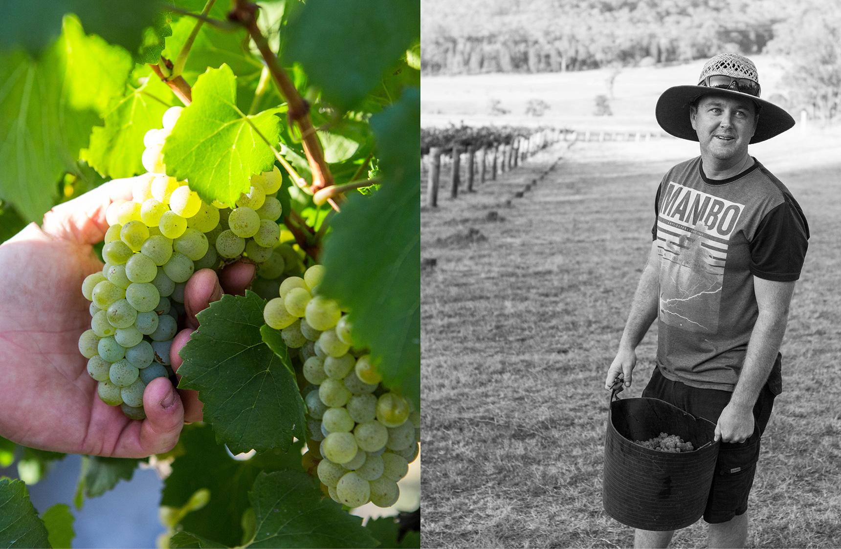 mjk_horner-wines_01